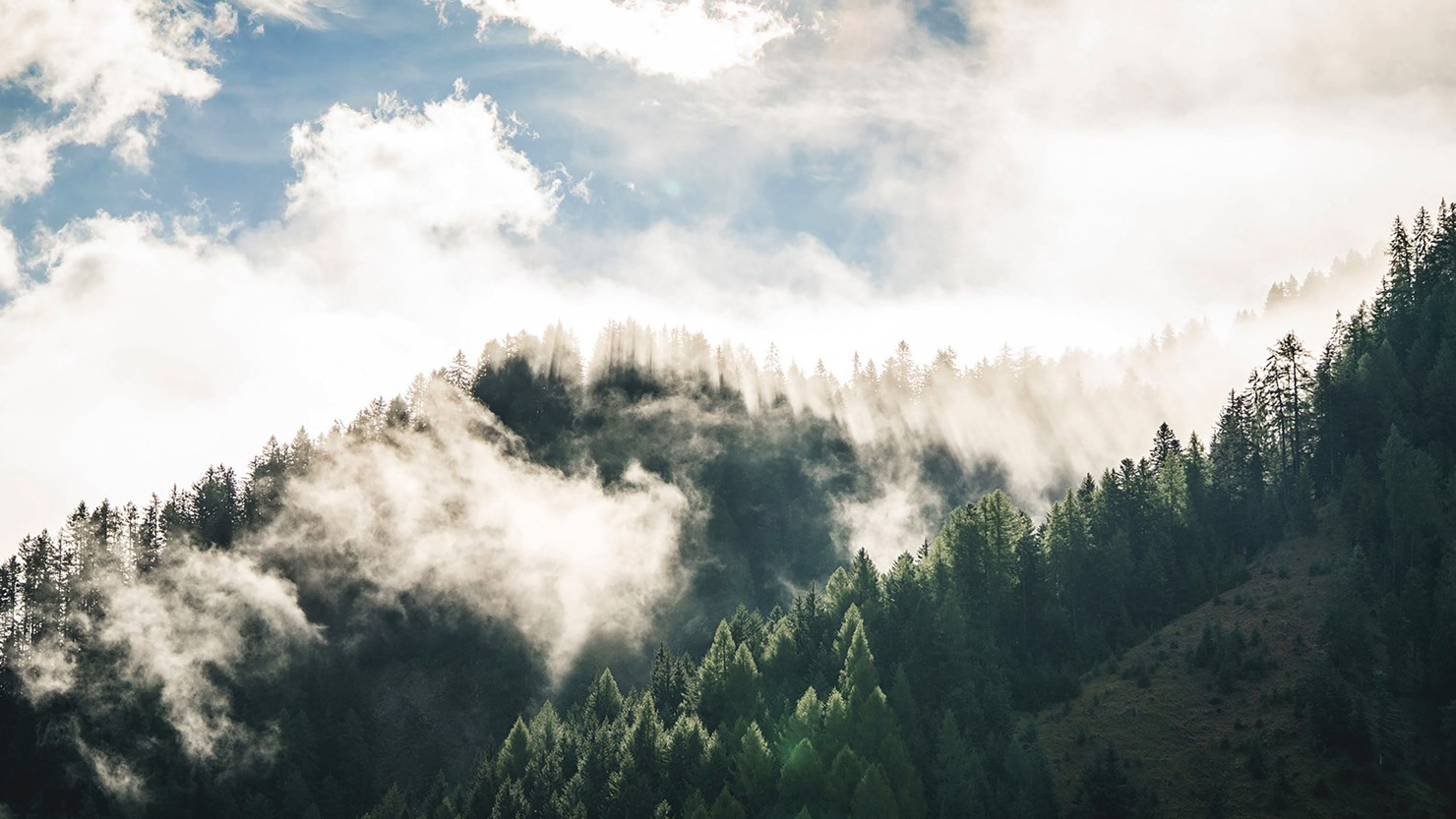 FORESTIS Foggy Mountains 2